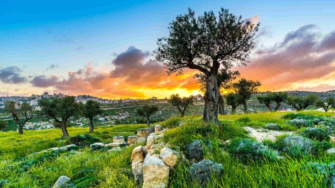 Champ des bergers Israël Oasis