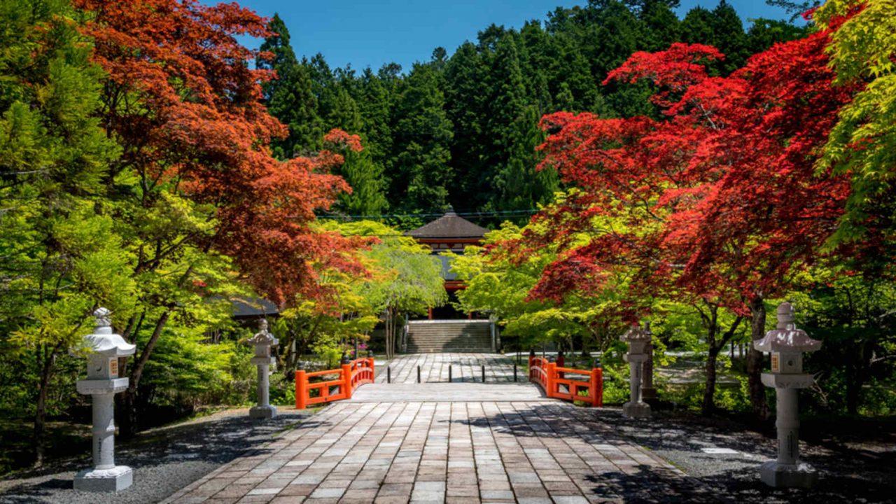 Sérénité du Mont Koya Japon Oasis