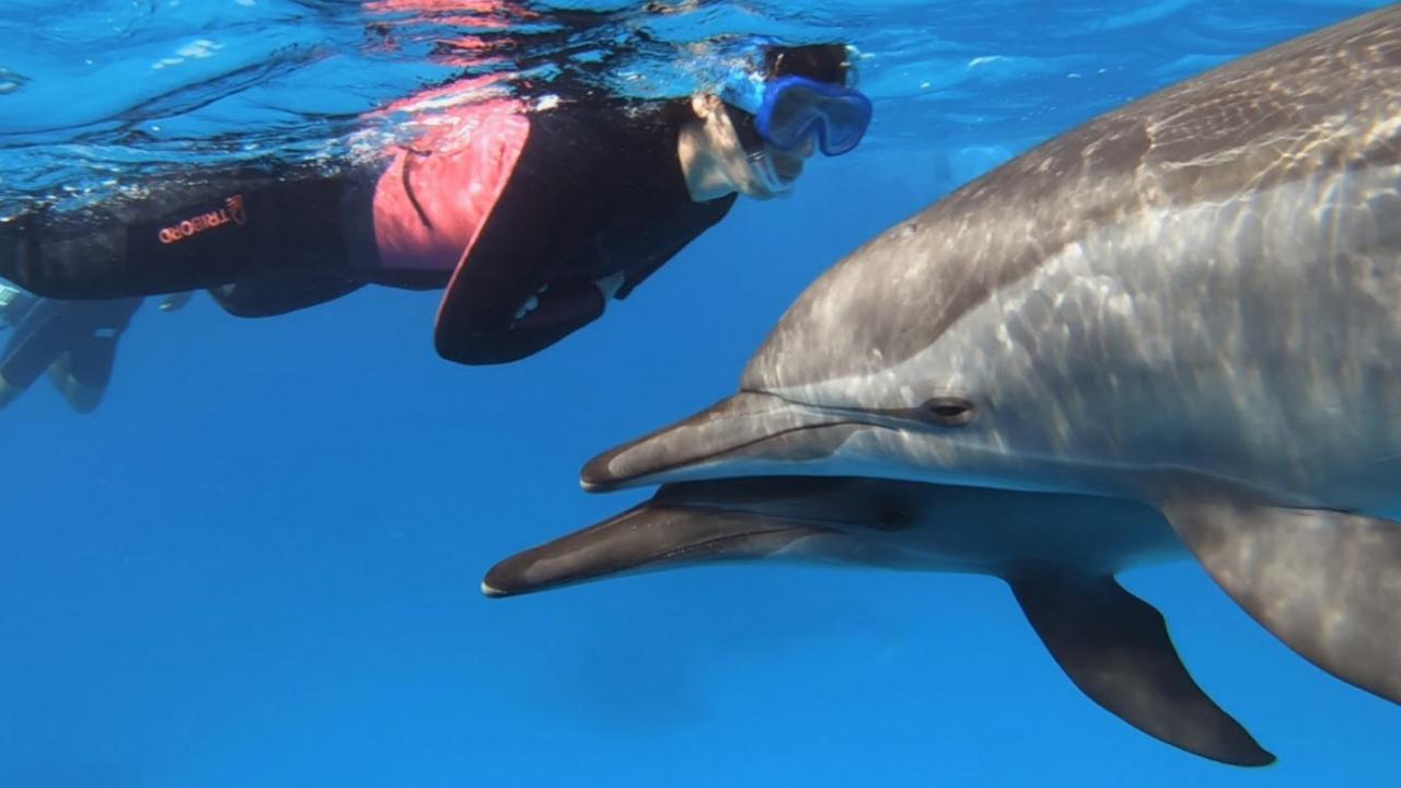 Snorkeling turciops Egypte Oasis