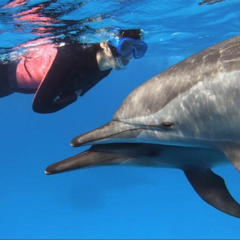 Voyage initiatique avec les dauphins