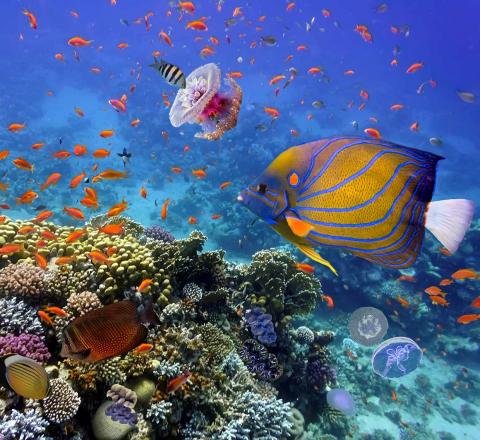 Vie maritime lagon Sataya Egypte Oasis
