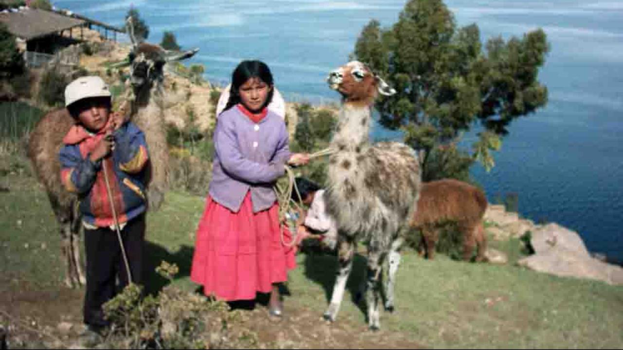 Enfant du Lac Titicaca, Pérou, Oasis