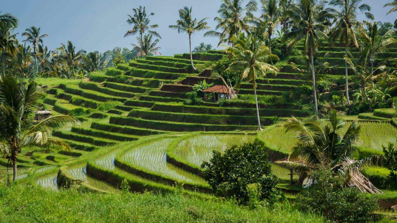Sublimes rizières de Bali Oasis