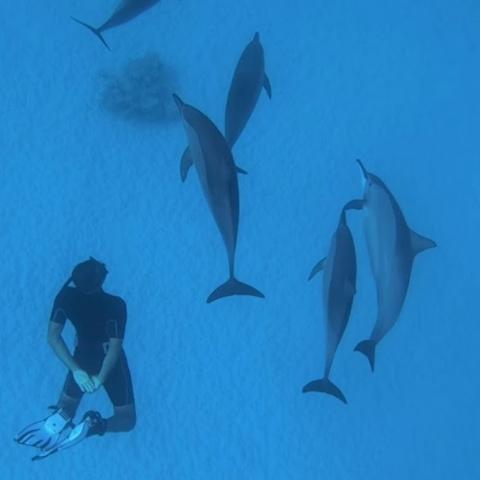 Approche dauphins Sataya Egypte Oasis