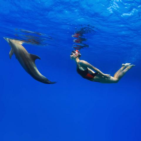 Expérience nage dauphins Egypte Oasis