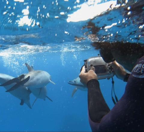 Découverte dauphins Sataya Oasis