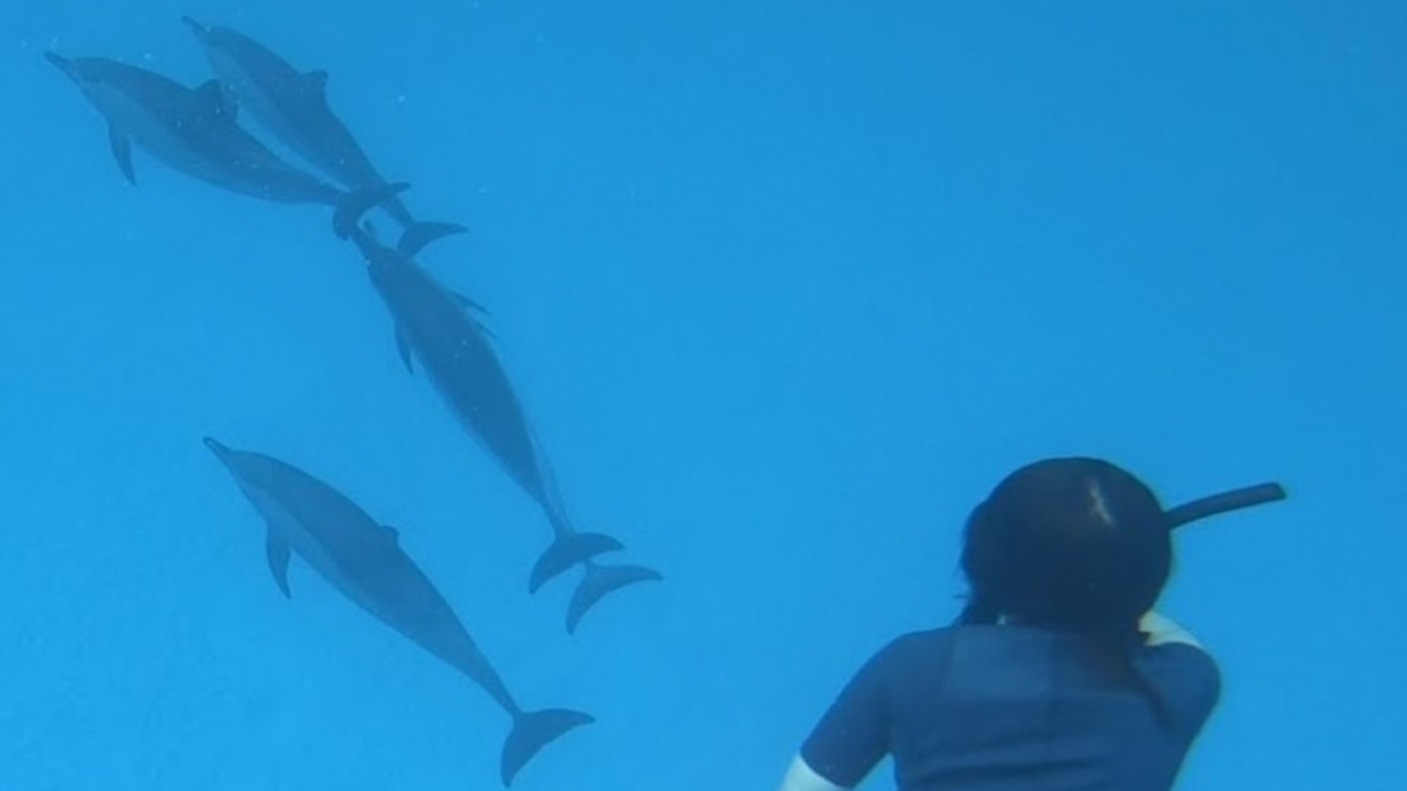 Rencontre dauphins Mer Rouge Oasis