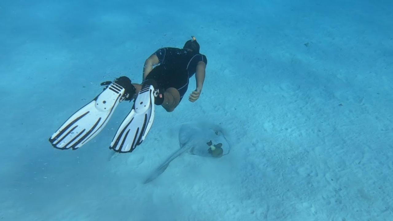 Rencontre animaux marins Egypte Oasis