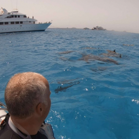 Rencontre stenelles Mer Rouge Oasis