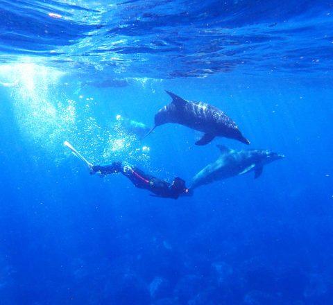Voyage rencontre dauphins libres Oasis