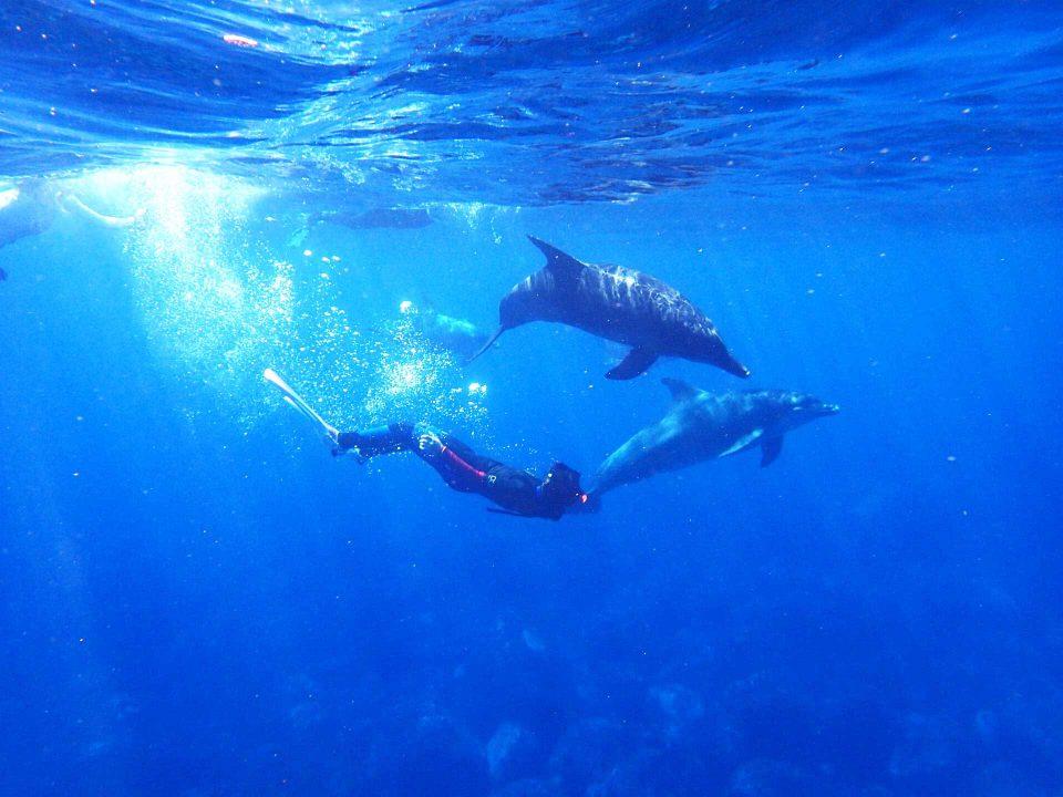 Une rencontre avec les dauphins libres