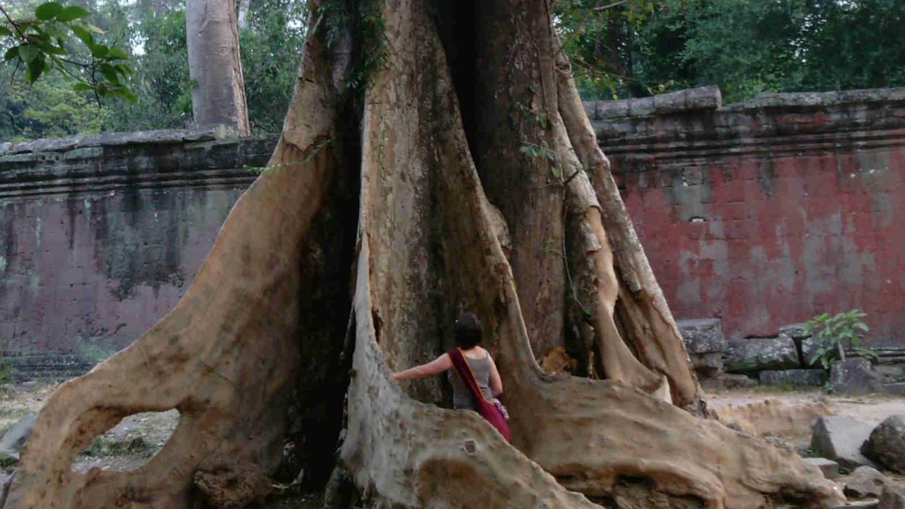 Energie arbre Ta Phrom Cambodge, Oasis